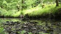 Du zéro phyto à la biodiversité